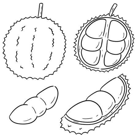 vector set of durian