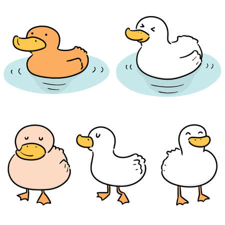 vector set of duck