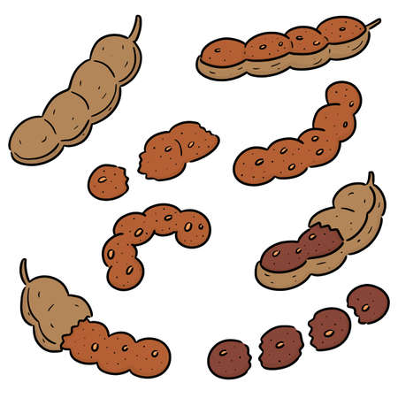 vector set of tamarind Illustration