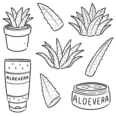 vector set of aloe vera and aloe vera product
