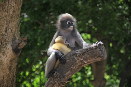 monkey and baby photo