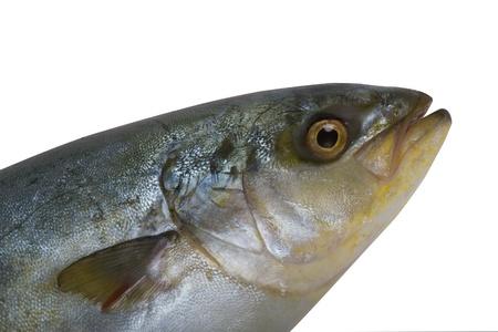 fish on white background   Stock Photo
