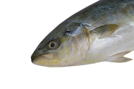 fish on white background   photo