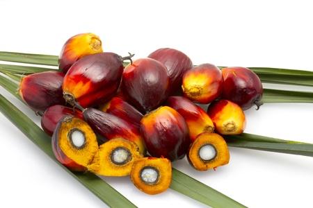palm oil fruit  Stock Photo
