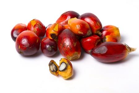 red palm oil: olio di palma di frutta