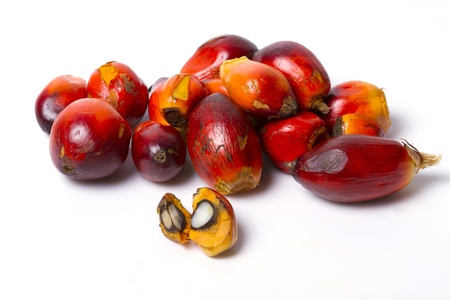 palm oil fruit  Stock Photo - 15753144