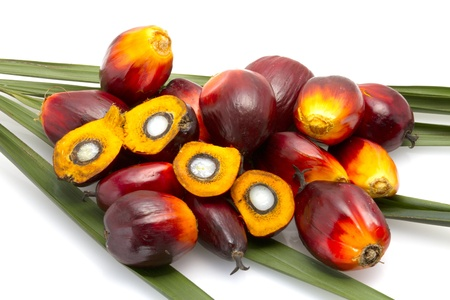 palm fruits: palm oil fruit Stock Photo