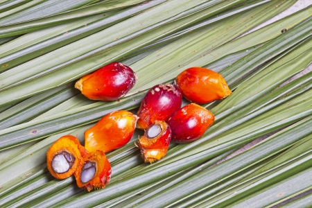 red palm oil: palm 0il fruit  Stock Photo