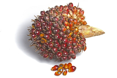 red palm oil: palm oil fruit  Stock Photo
