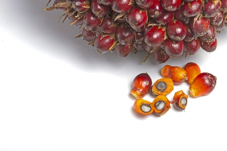 palm oil fruit  Stock Photo