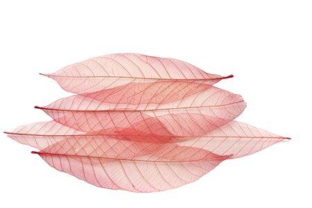 transparent leaf Stock Photo