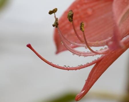 macro red flower Stock Photo