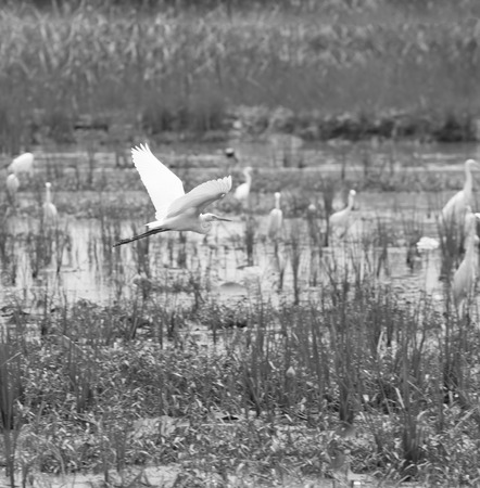 A black and white birds in the field.