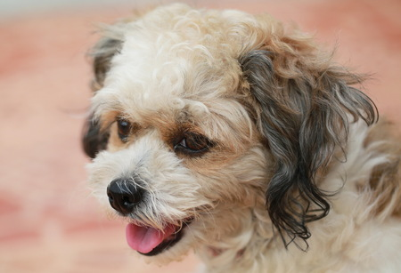 A young dog portrait. Stock Photo