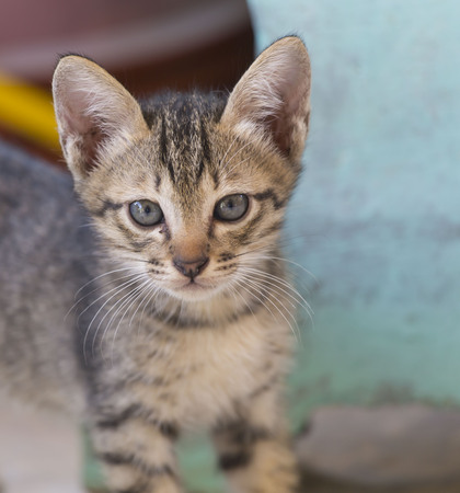 A young cat is looking.