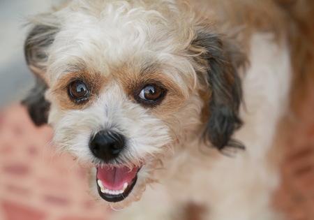 A young dog portrait