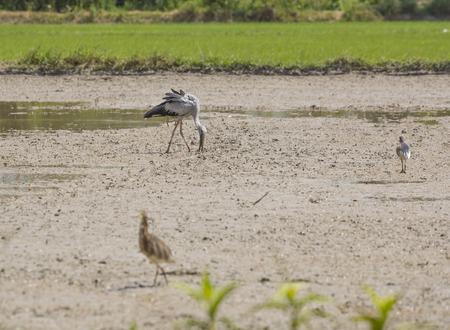 A birds in the field.