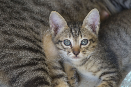A cat is looking. Stock Photo