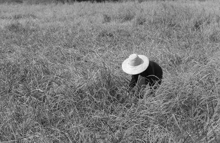 A farmer in the field.
