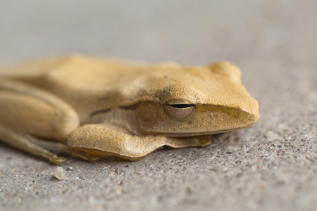 A Close up frog. Stock Photo