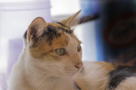 A young cat portrait.