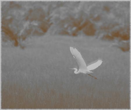 A flying white birds. Stock Photo