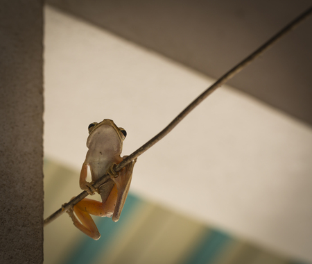 A frog on the line.