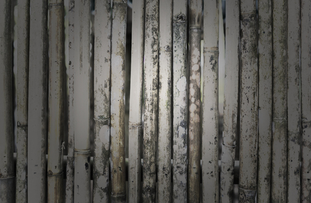 A bamboo is texture.