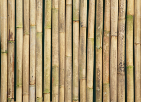 This is bamboo wood texture.