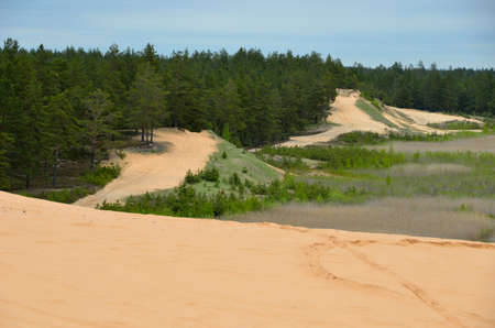 sand quarry: Sand dunes surrounded by forest. Stock Photo