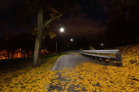 Autumn fallen leaves lie on the path in a city park at night.