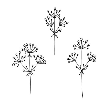 Hand-drawn vector illustration. Set of simple wild grass, twigs. Sketch, black lines on a white background. For modern decor. 向量圖像