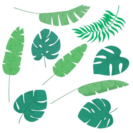 Set with tropical leaves, summer collection. Cartoon vector illustration. Vectores