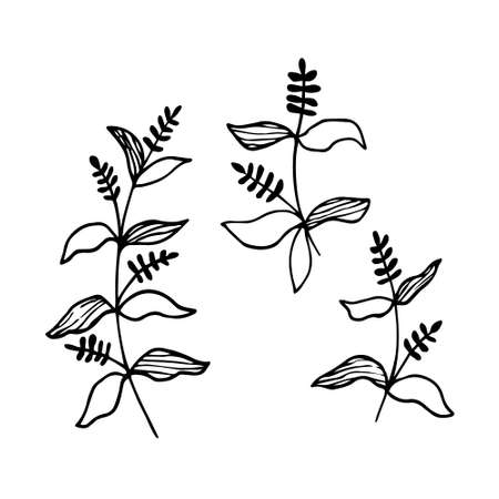 Hand drawn vector illustration. Set of simple wild grass, twigs. Sketch, black lines on a white background. For modern decor. Illustration