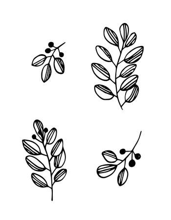 Hand drawn vector illustration. Set of simple branch, twigs. Black lines on white background, sketch, Doodle style. Illustration