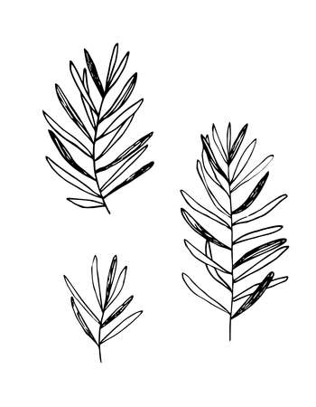 Simple twigs, grass, plant with long leaves. Black outline, silhouette on white. Hand drawn vector illustration.