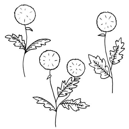 The outline of the dandelion, black line on a white background, a simple silhouette. Hand drawn vector illustration. Illustration