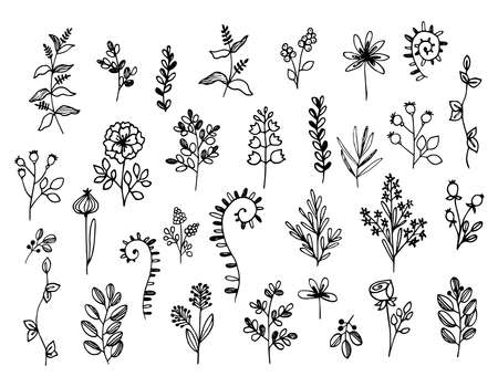 Set of twigs, grass, flowers of different shapes. Simple plant silhouettes in Doodle style, outline. Hand drawn vector illustration.