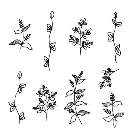 Hand drawn vector illustration. A set of simple twigs, wild grass. Sketch, black lines on white. For modern decor, clipart .