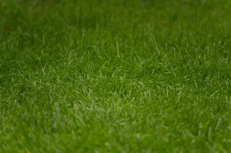 Close-up detail of bright green fresh cut grass photo