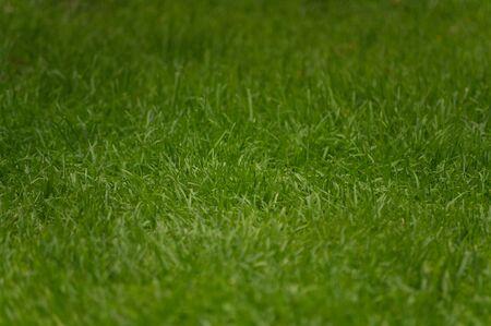 cut grass: Close-up detail of bright green fresh cut grass Stock Photo