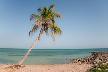 Palm tree on the beach in Key West Florida photo