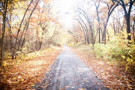 Route d'automne d'automne entouré d'arbres congés rouge et jaune Banque d'images - 14642671
