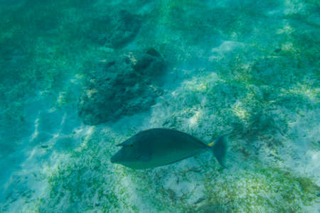 Fish snorkeling and diving underwater in the atoll of the Maldives Stock Photo