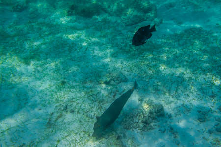 Fish snorkeling and diving underwater in the atoll of the Maldives Imagens
