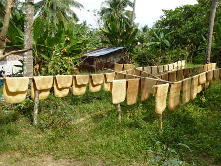 It's not a pankake! Villagers on Ko Chang Ranong are drying rubber on a clothes line Zdjęcie Seryjne