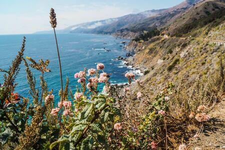 Flowers along the californian coastal line of Big Sur. A road trip opens your mind. Stock fotó