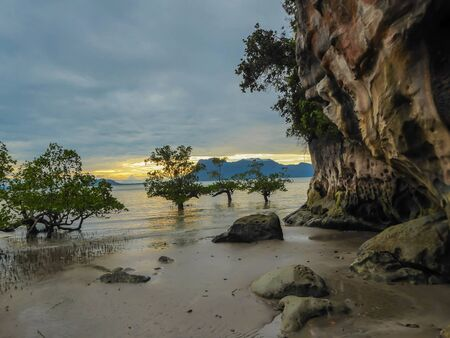 Trees swallowed by the sea in Borneo, Bako National Park of Malaysia during the sunset. Yellowish sun hiding behind the island. Rocky and desolated beach vibes. Фото со стока