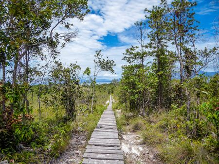 Mysterious, wooden and old patch, hiding many secrets, leading to many seaside adventures in Borneo, Bako National Park of Malaysia. Patch surrounded by green trees. Cloudy sky.