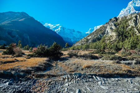 View on Annapurna Chain from Humde, Annapurna Circuit Trek, Himalayas, Nepal. Clear sky above the peaks. Dry grass, some trees on the mountain slopes. Endless range.  Small stream flows i the middle. 스톡 콘텐츠